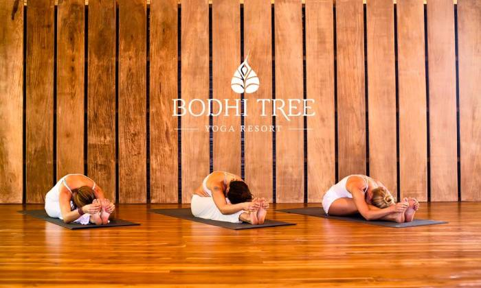 bhodi tree yoga resort