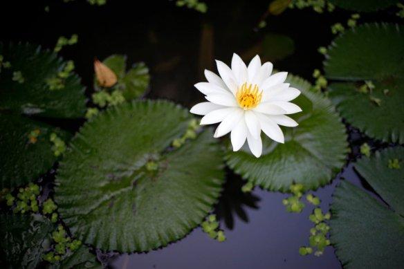 lotusbali